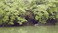 pond, lagoon, scape 77323583