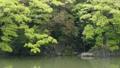pond, lagoon, waterfall 77323584