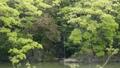 pond, lagoon, waterfall 77323585
