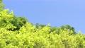 藍天和初夏新綠色風景 77325189