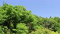 藍天和初夏新綠色風景 77325190
