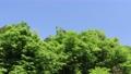 藍天和初夏新綠色風景 77325191