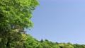 藍天和初夏新綠色風景 77325192