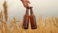 In a woman's hand, two bottles of beer on a wheat field. Drink. Farmer brewer carries fresh cold beer through a field of ripe wheat. Tasty mildly alcoholic beer drink in a man's hand. 77343362