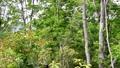 新緑の季節の森 小鳥のさえずりとそよぐ風 77384339