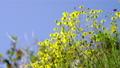 花朵 花卉 花 77406300