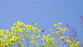 花朵 花卉 花 77406301