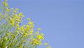 花朵 花卉 花 77406302