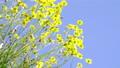 花朵 花卉 花 77406303