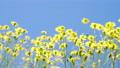 花朵 花卉 花 77406305