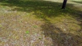 verdure, landscape, scape 77407534