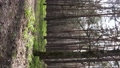 Vertical video of beautiful forest landscape aerial view 77410309