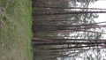 Vertical video of beautiful forest landscape aerial view 77410311