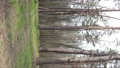 Vertical video of beautiful forest landscape aerial view 77410432