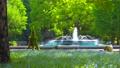[4K収録, 音声有り]日本の春 東京千代田区 日比谷公園のネモフィラ[zoomout/15sec] 77410485
