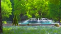[4K収録, 音声有り]日本の春 東京千代田区 日比谷公園のネモフィラ[zoomin/15sec] 77410486