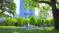 [4K収録, 音声有り]日本の春 東京千代田区 日比谷公園のネモフィラ[fix/20sec] 77410487