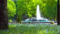 [4K収録, 音声有り]日本の春 東京千代田区 日比谷公園のネモフィラ[fix/45sec] 77410490