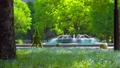[4K収録, 音声有り]日本の春 東京千代田区 日比谷公園のネモフィラ[fix/30sec] 77411673