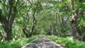 Fresh green tree-lined avenue 77415249