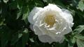 botanic, botanical, bloom 77415699
