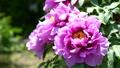 botanic, botanical, bloom 77415701