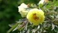 botanic, botanical, bloom 77415702