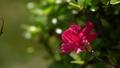 vegetation, vegetative, bloom 77415703