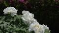 botanic, botanical, bloom 77415704
