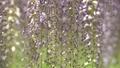 botanic, botanical, bloom 77415799
