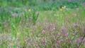 野花 花朵 花 77423923