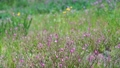 野花 花朵 花 77423924