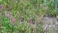 野花 花朵 花 77423925