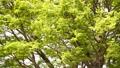 翠綠 鮮綠 分支 77425512