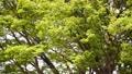 翠綠 鮮綠 分支 77425513