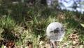earth, globe, globes 77429136