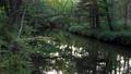 奧日光 河 自然 77434163