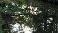 奧日光 河 自然 77434164