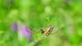 spider, spiderweb, spider's web 77449115