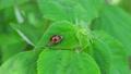 beetle, ladybug, bug 77449118