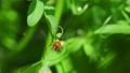 beetle, bug, hexapod 77449119