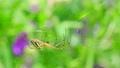 spider, animal, animals 77449121