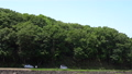 verdure, landscape, scape 77451971