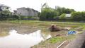 paddy field, rice field, paddy 77452038