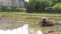 paddy field, rice field, paddy 77452040