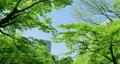 葉子 葉 樹葉 77457600