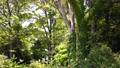 翠綠 鮮綠 樹木 77459241