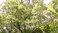翠綠 鮮綠 樹木 77459242