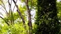 翠綠 鮮綠 樹木 77459316