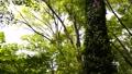 翠綠 鮮綠 樹木 77459317